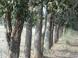 Farm plots for sale near Ramoji Film City, Vijayawada Highway