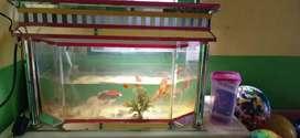 jual aquarium standar
