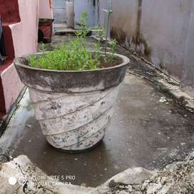 Cement pots with good condition