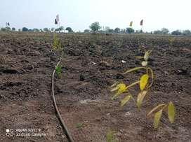 121Sqyds,One Gunta,Farming land For Sale @Sadashivpet