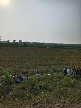 350 BIGHA LAND SELL NEAR National highway ;Rangia