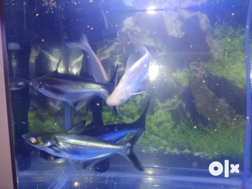 5 Shark fish 0