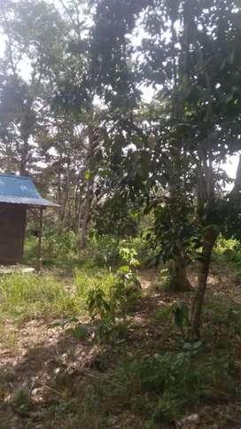 Tanah Investasi dengan Kebun durian dan Pete