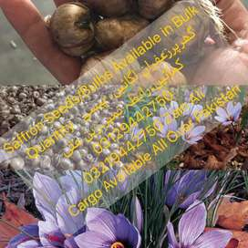 We Have Different Types Of Zaffron or Saffron Seeds/Bulbs
