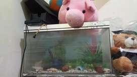 Aquarium tambah mesin pompa air