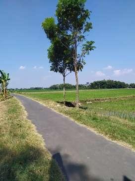 Tanah SHM 304 m² Sidorejo Bendosari Sukoharjo (Sawah) Hapsari ke Timur