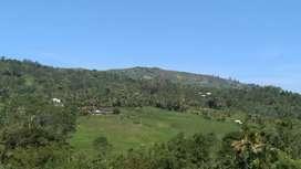 Di jual sawah 4 hektar atau 40.000m2 harga 2.2M nego