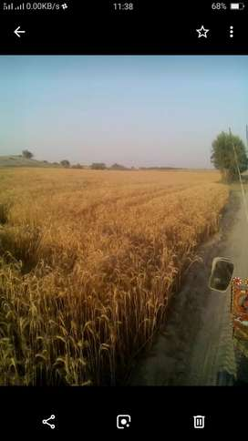 20 ACRE ARMY ALLOTED AGRICULTURE LAND