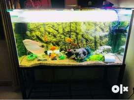 Fish Aquarium Sale