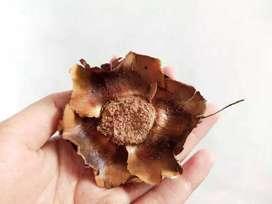 Bunga Kelapa   Mahkota kelapa kering   Craft   Rustic   Hiasan Mahar