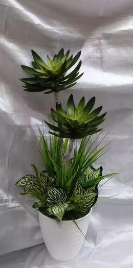 Rangkaian kaktus minimalis