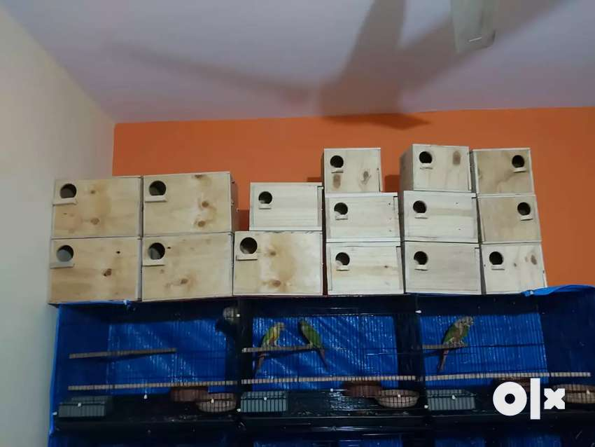 New African love birds breeding boxes 0