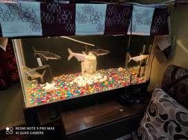Ranghills fish tank