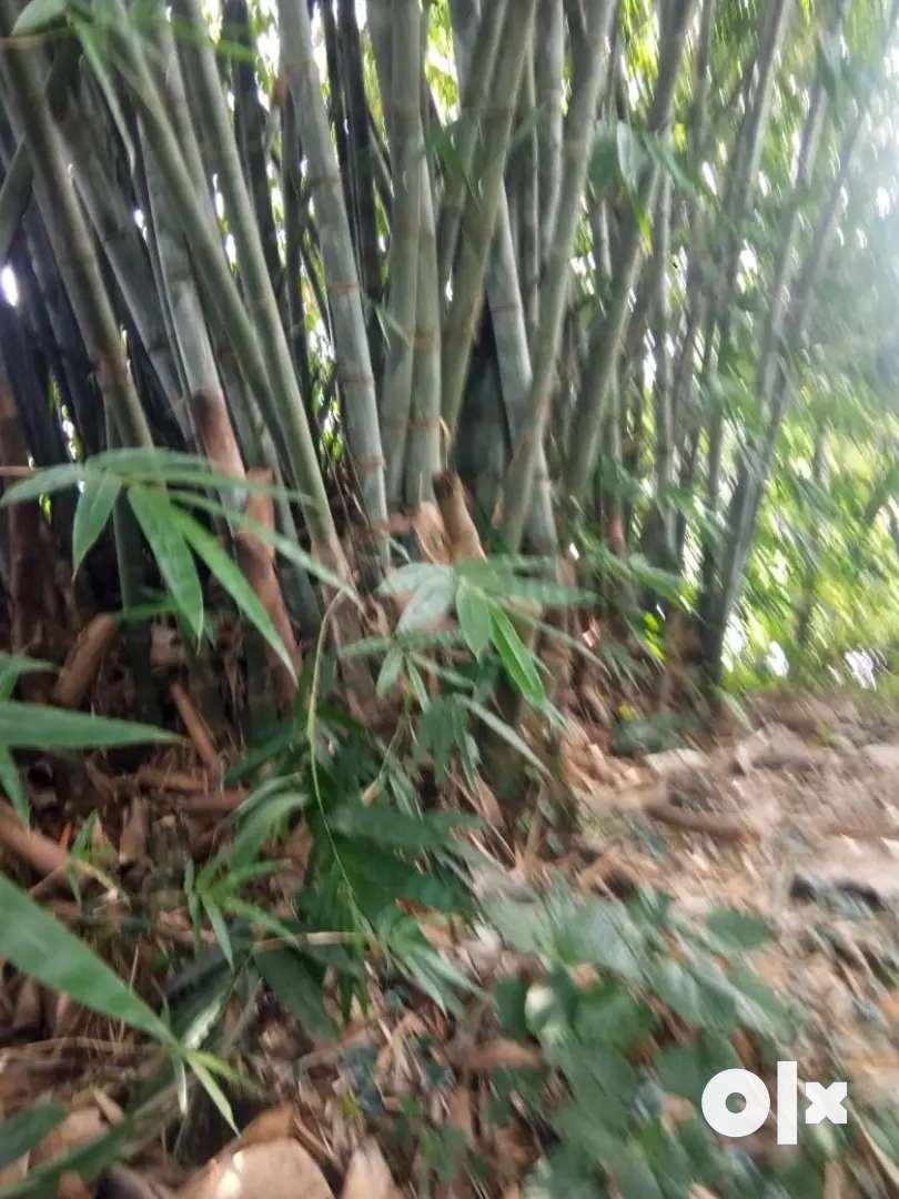 Bulk bamboo for sale 0