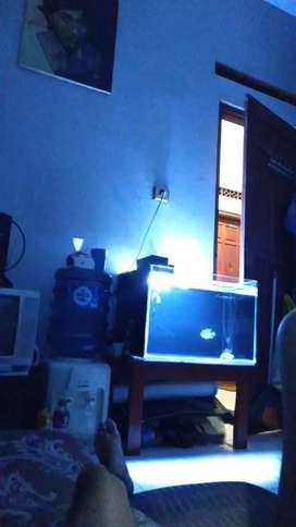 Aquarium fullshet dan ikan louhan srd (tanpa lampu led)