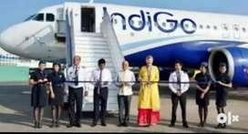 Indigo airlines flight Job
