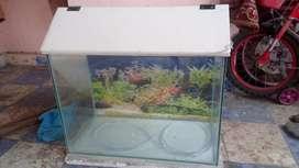 Aquarium Tank with fish food