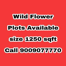 Wild Flower near Silver Spring Covered Campus Plots available plz call