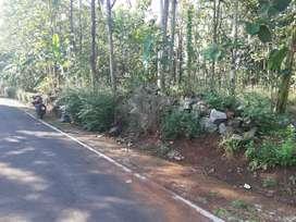 Tanah  bonus  pohon  jati  dan   batu  2  truk
