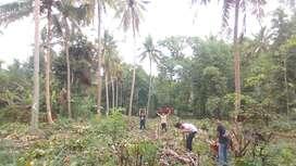 Tanah Pekarangan 5700m2 Tepi Jln Raya Tuksono Sentolo Kulon Progo