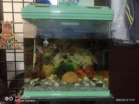 New designed fibre sheet fish aquarium