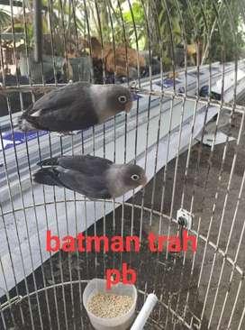 batman jodo koloni