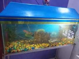 Aquarium with full gadgets