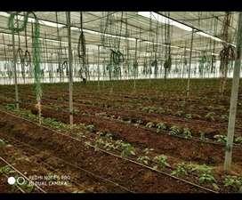 Urgent sale 7 acre farm at Wani yavatmal