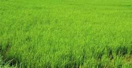 Land excellent for Chicken & Goat farming,