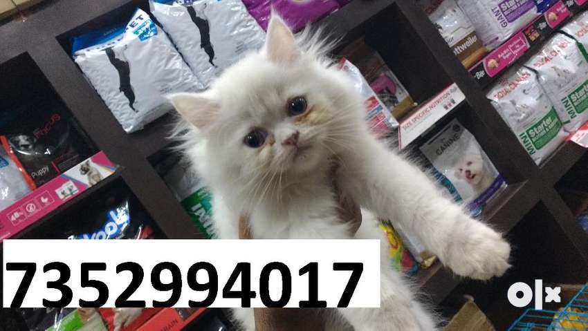 kitty of cats in banka with delivery 0