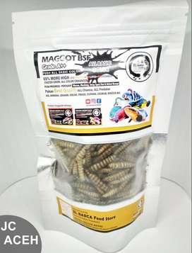 El Barca Feed Store Maggot BSF Grade A++_Channa maru ys ikan predator