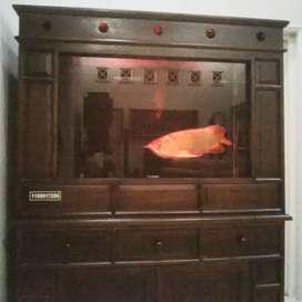Ikan Arwana Super Red Istimewa & Aquarium