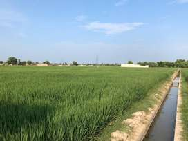 Agricultural Land for Sale in Jhang District