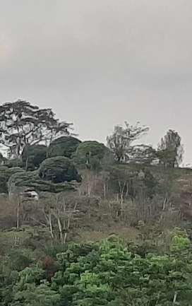 Tanah 2.6 hektar tawangmangu 300rb/mtr