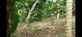 Tanah perkebunan bersertifikat SHM