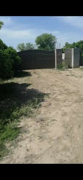 4 kanal Boundary wall shed for rent in Sargodha