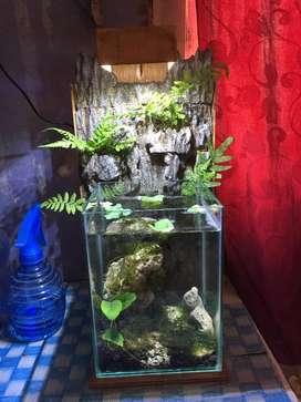 Mini Aquarium dengan Background Alam