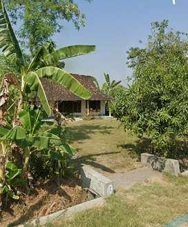 Dijual rumah kampung tanah luas