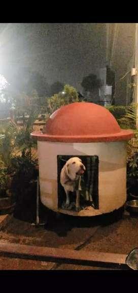 Fibreglass dome for doghouse or skylight