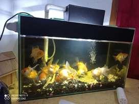 Dijual Aquarium + ikan (cuci gudang) lengkap + aksesoris
