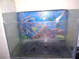 Big size fish tank