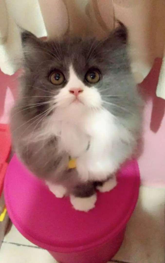 Jasa memandikan kucing salon (Grooming) 0