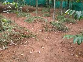 12 cent house plot with good road facility near kambalakkad