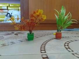 Plants for aquarium
