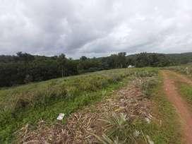 Eight acres land at Edakkattuvayal Ernakulam