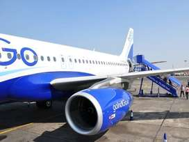 Urgent hiring for groundstaff,cashier,flight attendant Indigo airlines