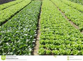 Agriculture/ Horticulture Consultancy & Lectures