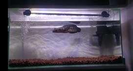 Aquarium 60Cm set dan cana maru ys 29cm