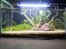Aquascaping tank
