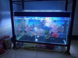 Dijual Aquarium + 2 ikan Louhan